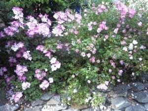 09-06-14-Flowers