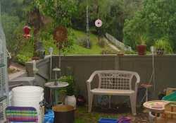 backyard-07-10-04